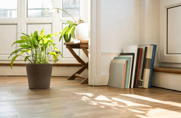 Gros plan sur un coin de pièce, avec parquet en bois, plante verte et livres